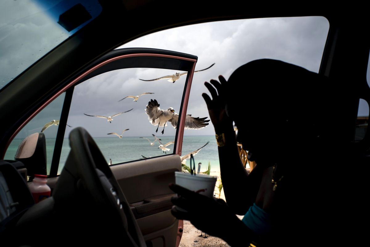 Flying seagulls seen from a car window.