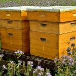 How much do you know about a beehive scale