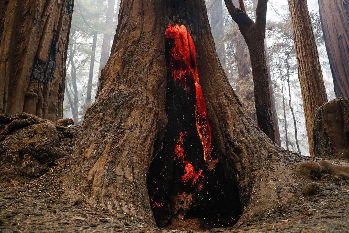 A redwood tree burns near Big Basin Redwoods State Park Headquarters & Visitor Center in Boulder Creek, Calif., on Thursday, Aug. 20, 2020.